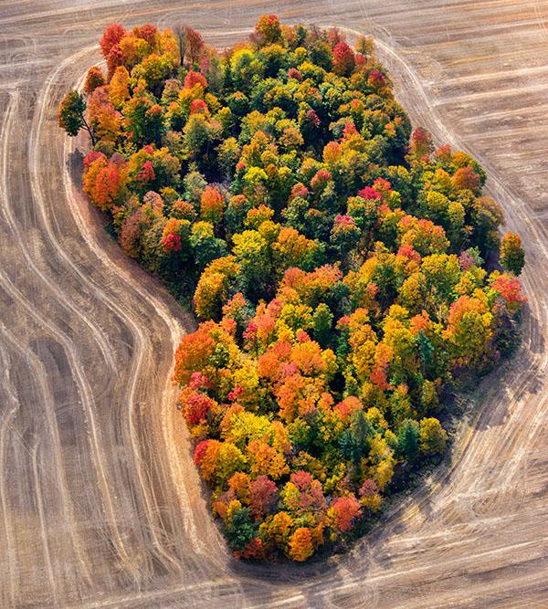 Fall near Toronto
